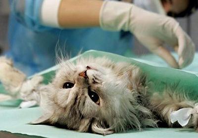 Кастрация кота в иркутске цена